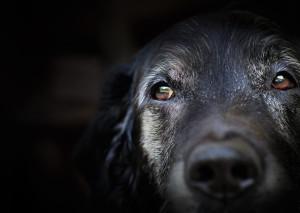Pet Euthanasia Sutherland Shire Cronulla Veterinary Clinic